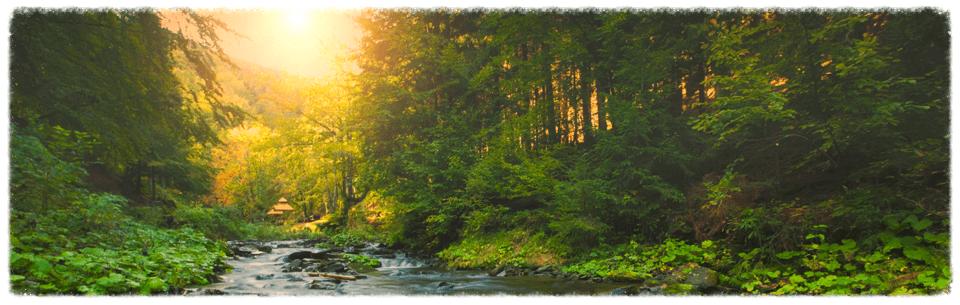 Sunlight Through Woods Banner Image